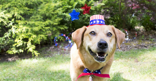 Fireworks and Your Pet: Tips for Staying Safe This Fourth of July