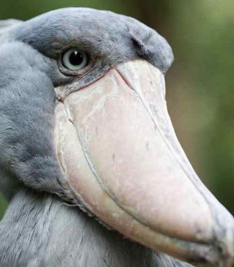 Unduh 860+ Foto Gambar Burung Zaman Purba HD Paling Keren Gratis