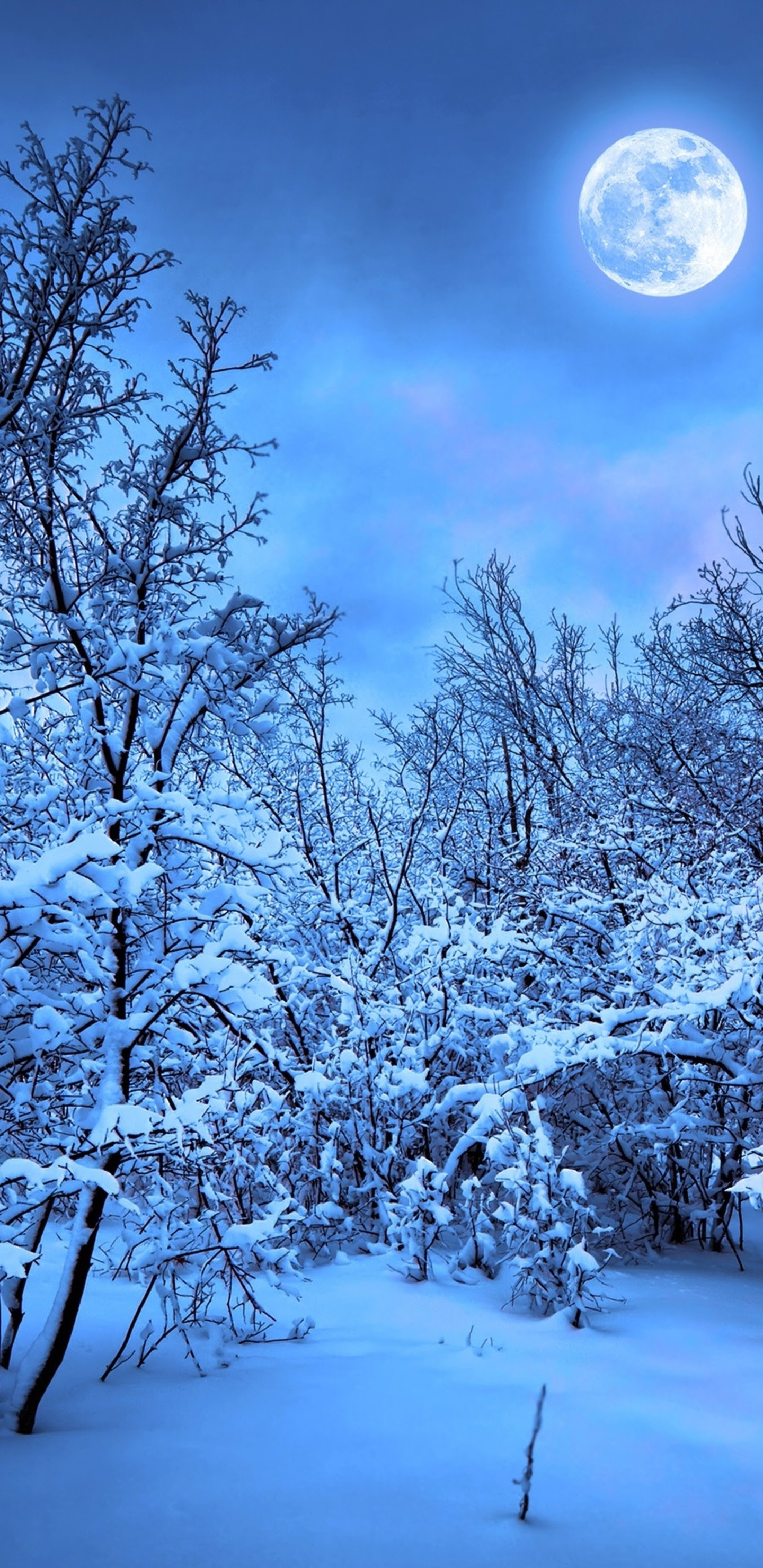 Snow Winter Wallpapers 68+ background pictures