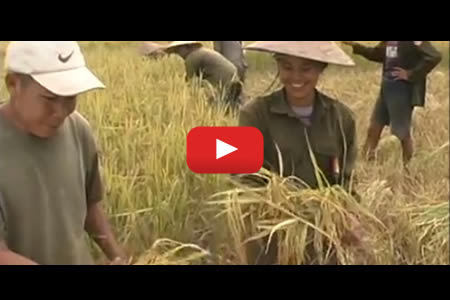 Step-by-step production - IRRI Rice Knowledge Bank