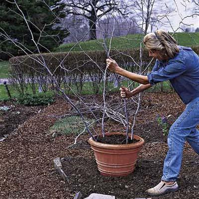 ένθετα κηπουρός τέσσερα ψηλά κλαδιά σε κατσαρόλα γεμάτη με πλούσιο potting χώμα