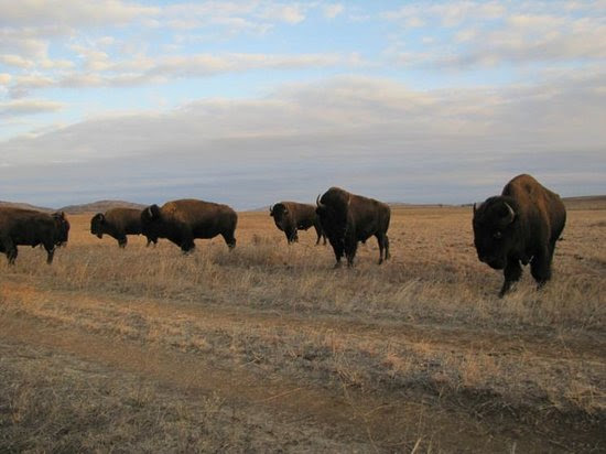 Photos of Wichita Mountains National Wildlife Refuge, Indiahoma