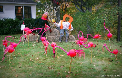 A Flock of Pumpkin Flamingos