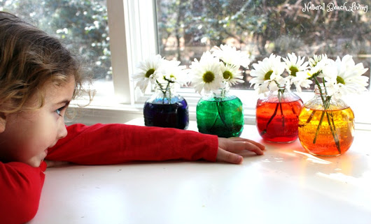 Easy Flower Science Activities for Preschool and Kindergarten - Natural Beach Living