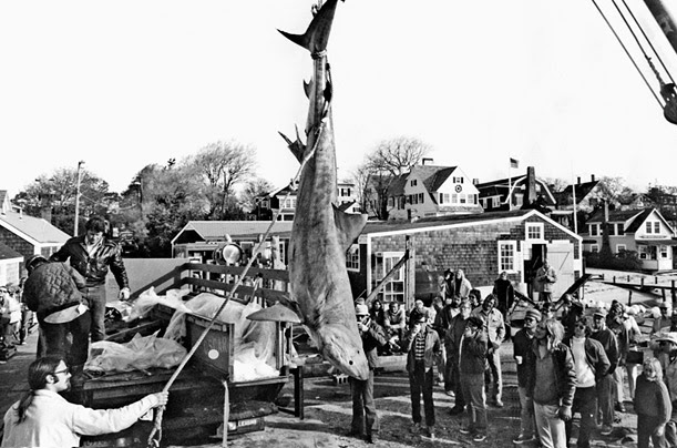 Spielberg and crew observe as teamsters remove the not-so-freshly-caught shark from its ice-packed shipping crate.