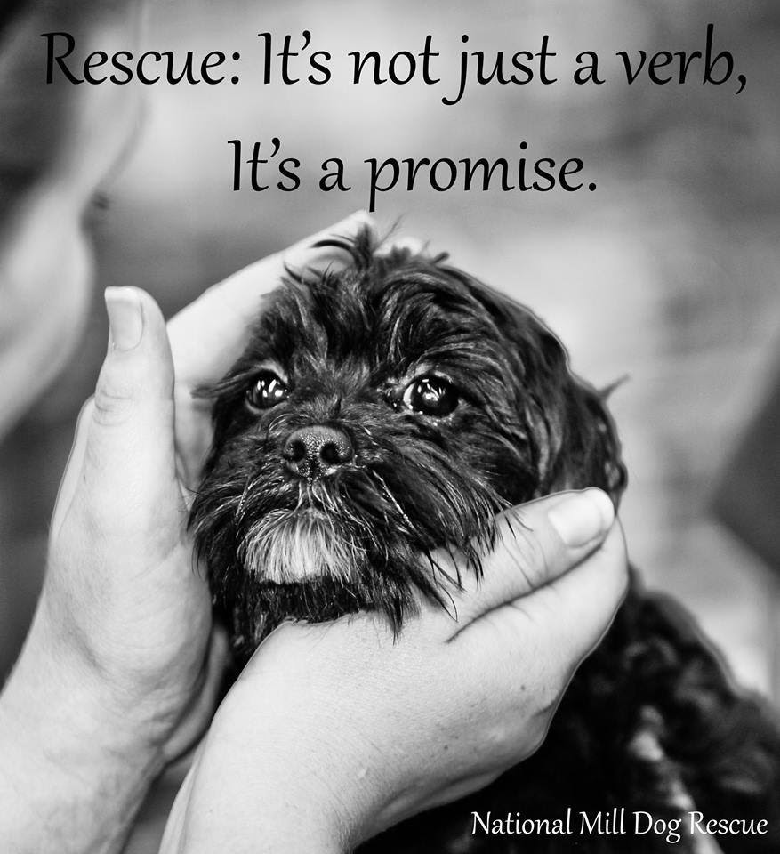 Quotes About Rescue Dogs 46 Quotes