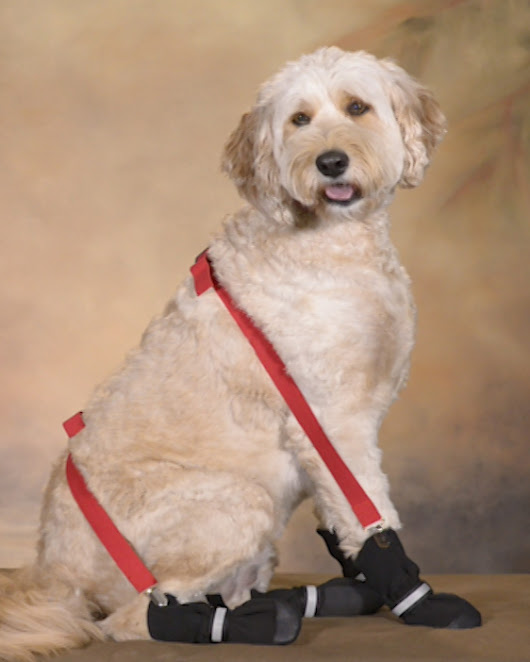 Why Dog Suspenders are Practical
