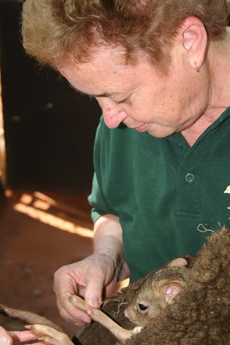 June with Brush Tailed Bandicoot