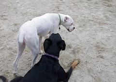 DogPark_LolaRascal_82111