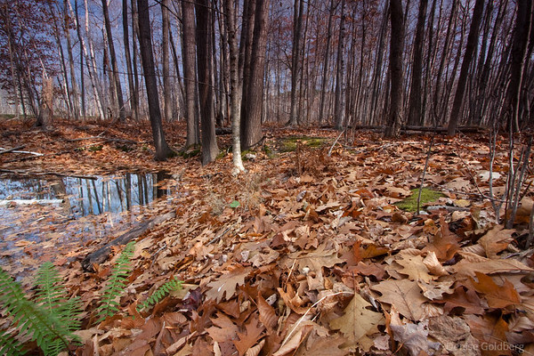 trees, fallen leaves, reflections