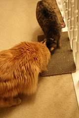 Jasper and Maggie checking out the nip