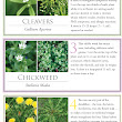10 Common Weeds that Can Heal You / The ReadyBlog