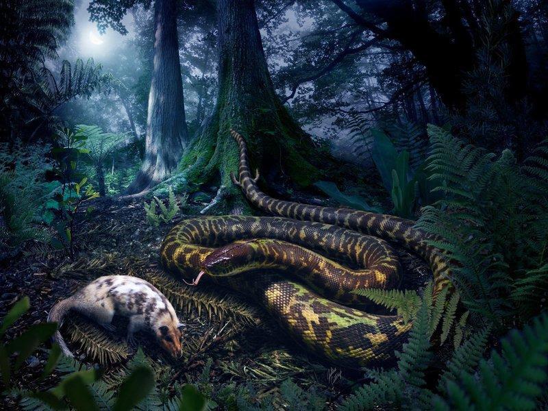 mae das cobras