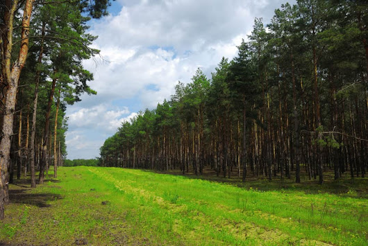 Localizing Timber Price Forecasts for Timberland Investments - LandThink