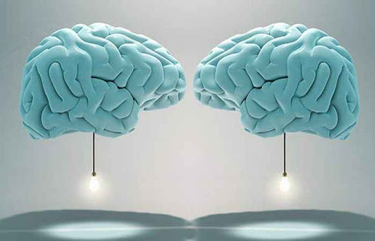 Are Male and Female Brains Biologically Different?
