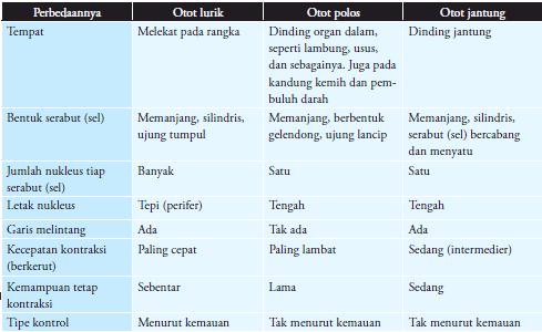 Perbedaan Struktur Jaringan Otot Polos Lurik Dan Jantung