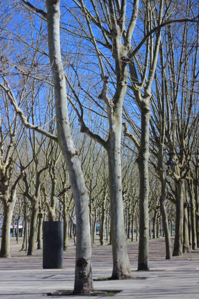 photo 4-bordeaux-printemps-place-quinconces_zps9bebbc5e.jpg
