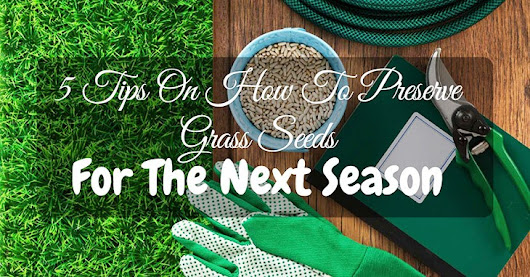 5 Tips On How To Preserve Grass Seeds For The Next Season