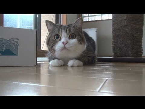Celebrating Maru the Cat's Sixth Birthday With a Maru Supercut