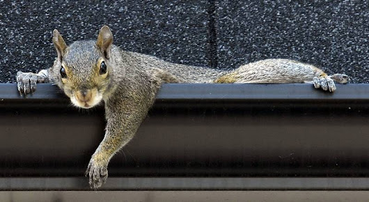Are squirrels a bigger cybersecurity threat than Russian hackers? One expert thinks so
