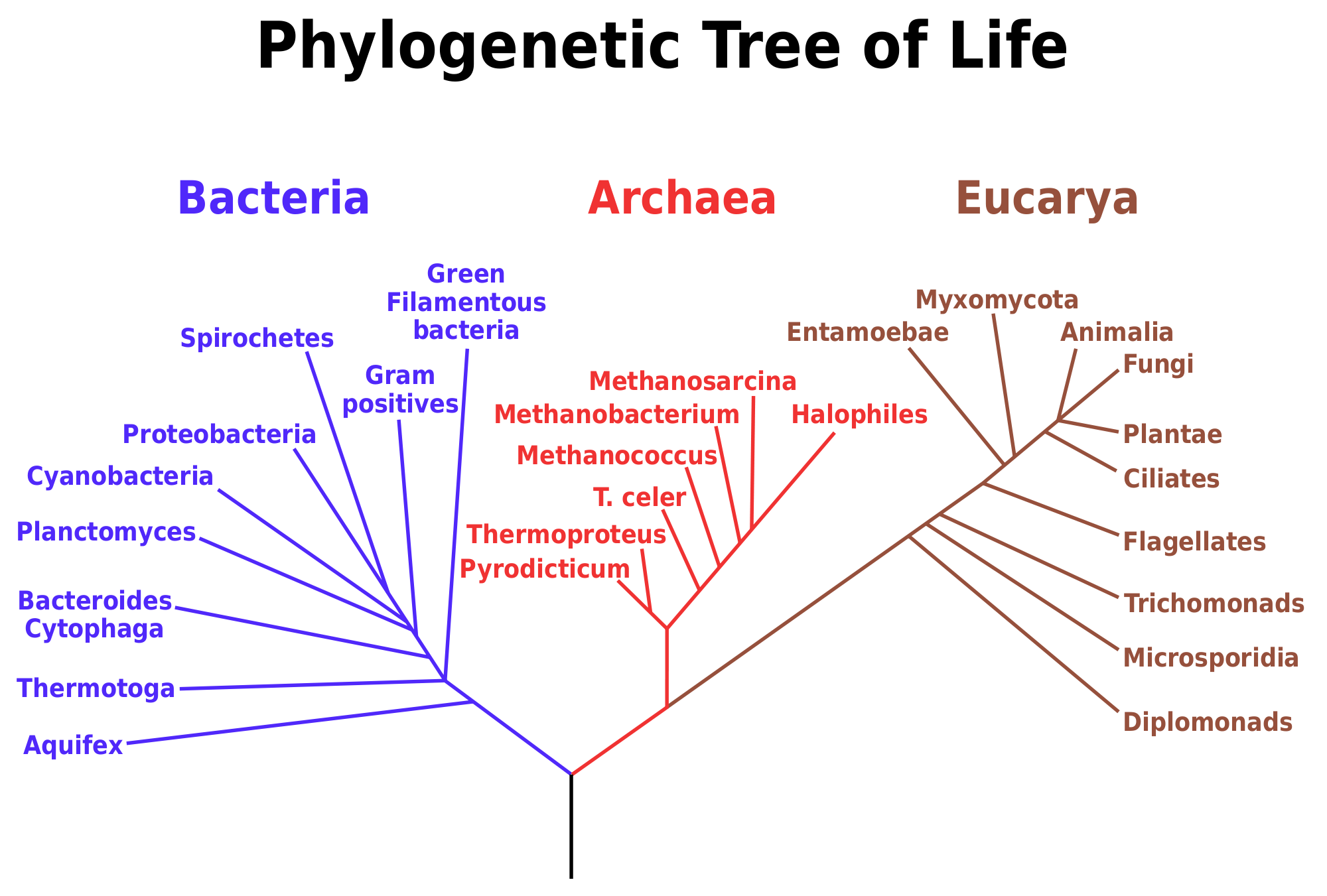 2000px Phylogenetic_tree_scientific_names