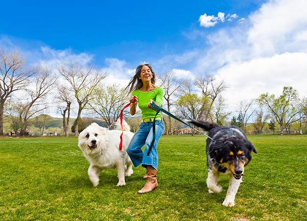Enjoyable Activities With Your Dog