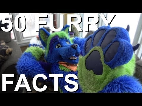 50 FUN FURRY FACTS!!! - Odin Wolf