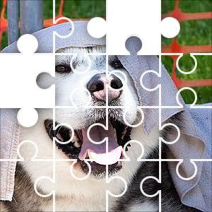 Daily Jigsaw Puzzle Dog Wet Towel 48 Piece Usa Jigzonecom