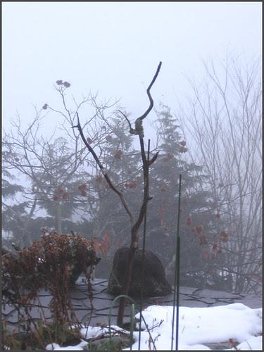 03 birds landing branch