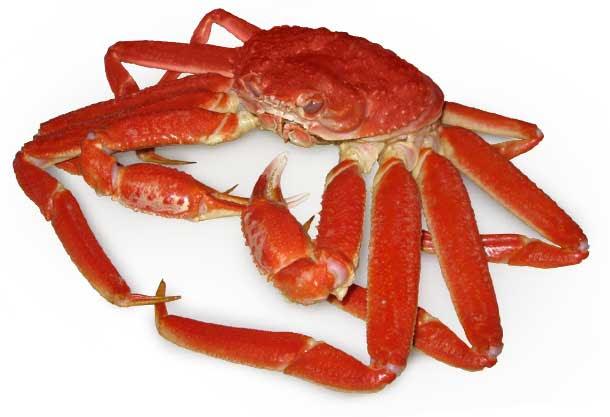 """Résultat de recherche d'images pour """"crabe"""""""