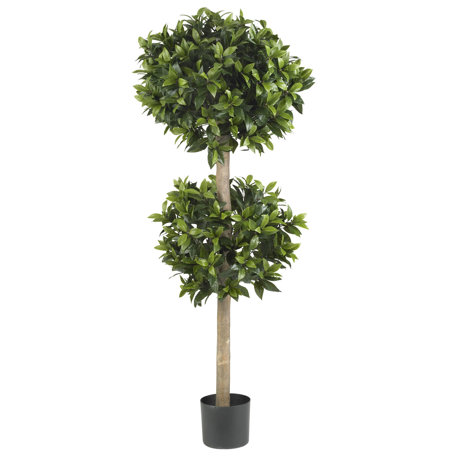 Perfect Double Green Real Topiary Trees