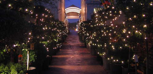 Join our 'Styling for Christmas' Event at Clifton Nurseries London on December 7th - Jane Means