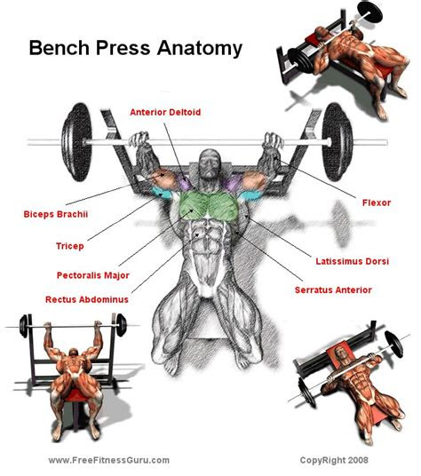 exercises  include   muscle building