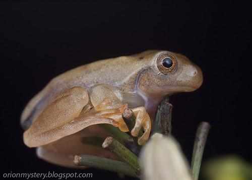 frog at night IMG_6866 copy