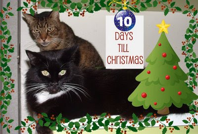 Sam_Tigger Christmas Countdown