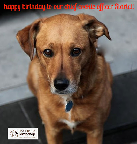 Biscuits by Lambchop - Happy Birthday to our Chief Canine Cookie Officer Starlet!