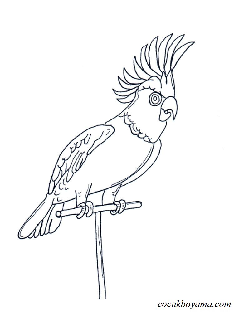 Muhabbet Kuşu 10 ücretsiz Boyama Resimleri