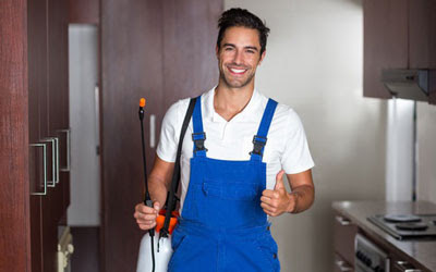 4 Signs That Ask For Professional Pest Control Service