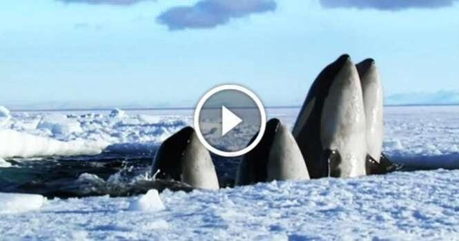 Este curto vídeo nos mostra a força que a natureza tem
