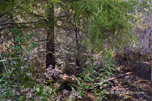 Clearing Out a New Beaver Dam  (1 of 9).jpg