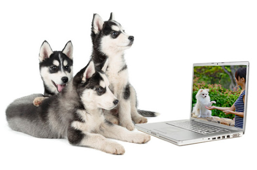 Online Dog Training