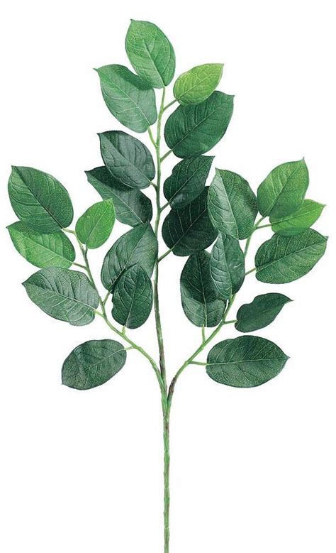 Lemon Leaf Branch   Faux Greenery at Afloral.com   Same