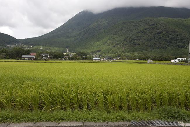 Yufuin Rice Field