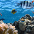 WHAT ORGANISMS LIVE IN MARINE ECOSYSTEMS? - Okeanis
