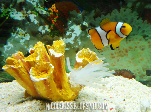 nemo and coral