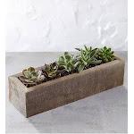 Mini Trough Succulents Mini Trough Succulents
