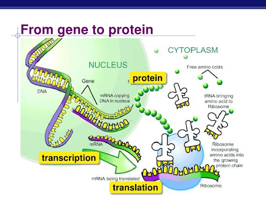 Genetic code, formation of amino acid code & Steps of Protein synthesis | Science online