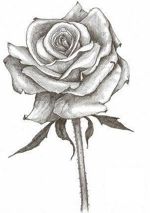 Rose And Stem Drawing At Getdrawingscom Free For Personal Use