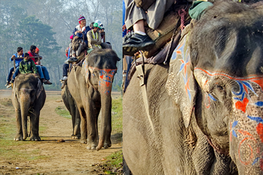 Help Help Captive & Working Elephants in Nepal reach its funding goal today!