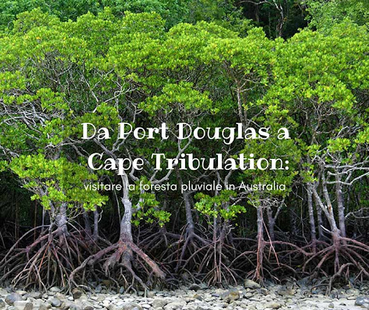 Da Port Douglas a Cape Tribulation: visitare la foresta pluviale in Australia